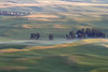 Early light on the Palouse in early Summer: Steptoe Butte, WA (July 18, 2012)