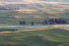 Early light on the Palouse in early Summer: Steptoe Butte, WA (July 18, 2012)