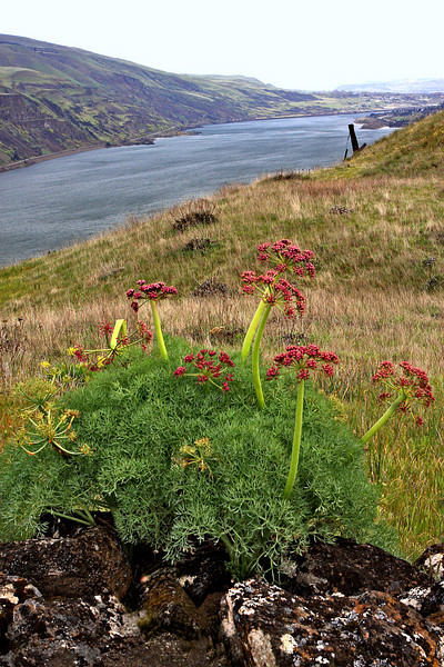 Rowena Crest in the Columbia Gorge (April, 2010)