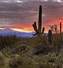 Mountain Park near Tucson, AZ (March, 2013)