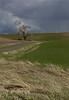 A field of the Palouse near Colfax, WA (4-26-14)