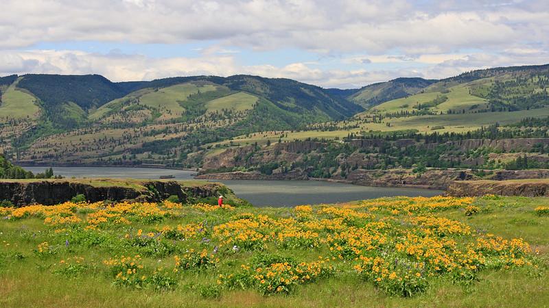 Rowena Ridge along the Columbia RIver (May, 2011)