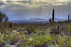 Rain approaching a S. Arizona desert (February 2012)