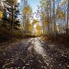 Fall Aspen Sunburst Timpanooke Road. Horizontal