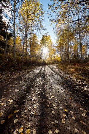 Fall Aspen Sunburst Timpanooke Road Vertical