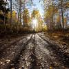 Fall Aspen Sunburst Timpanooke Road Vertical