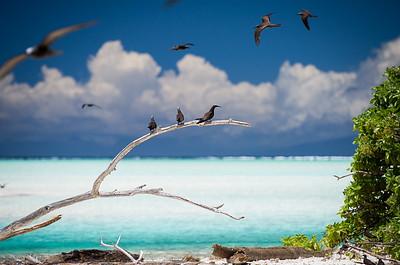 TETIAROA ATOLL - TAHITI - FRENCH POLYNESIA