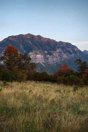 Meadows, Mountains, and Red Trees- Yes, Please