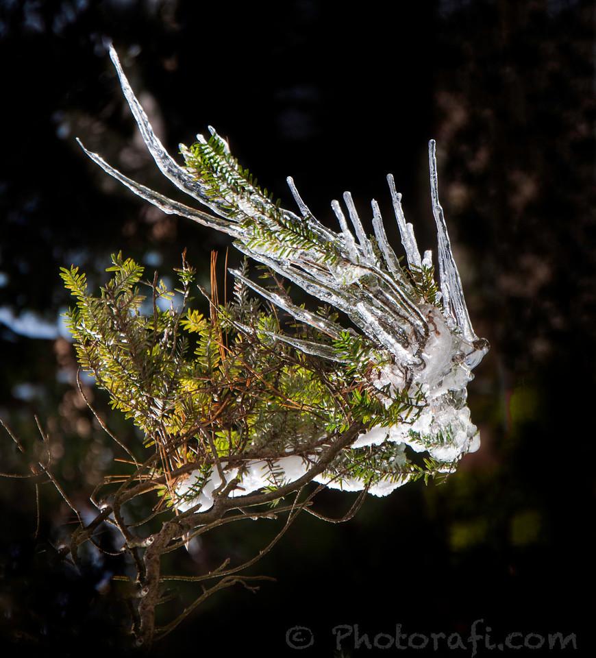 Ice Bird