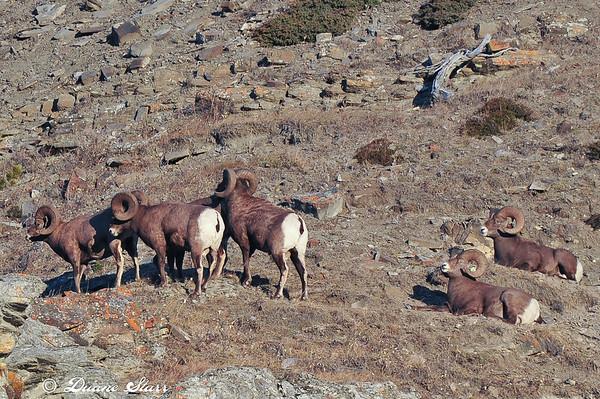 2010 Nov 07 Sheep River Run