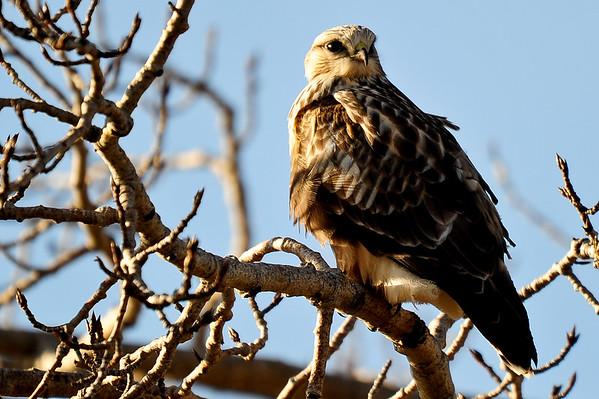 11 2011 Nov 11 Hawk, Students, Photographers, Sheep & Deer