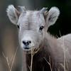 this years lamb