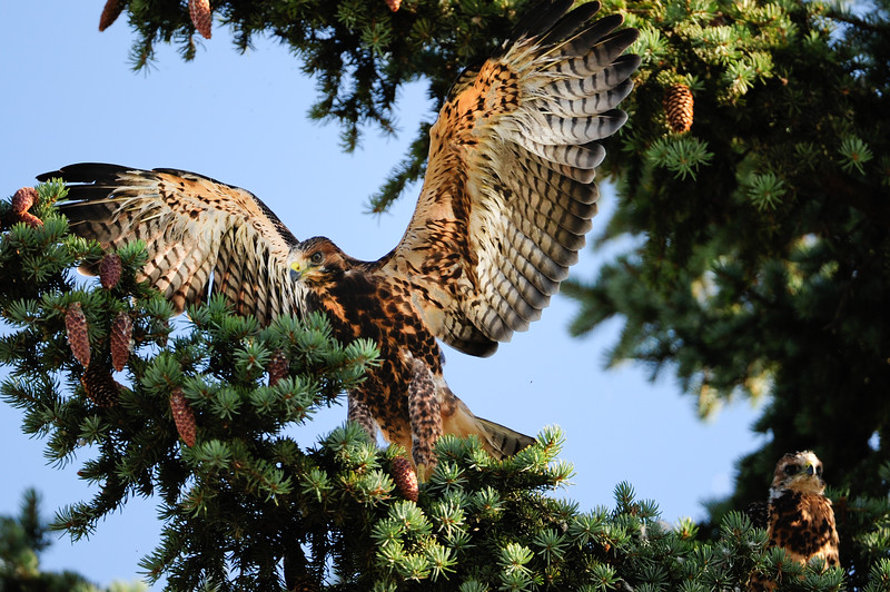 the 2 young ones are trying to fly and will leave the nest very soon now