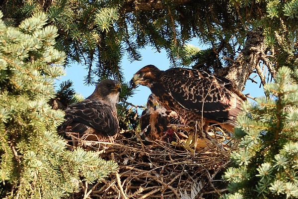 7 2011 July 31 Market Hawks Afternoon