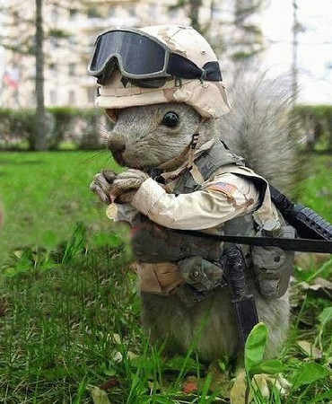 A secret weapon, just for fun !!!<br /> <br /> They go for the nuts, OUCH !!!