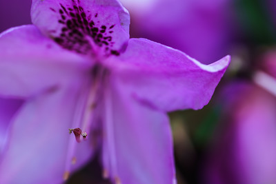 Artistic: Purple. A little macro.