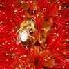 Red honey anyone?