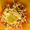 Pollen for everyone.