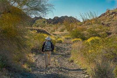 Hiker near El Camino Del Diablo #6