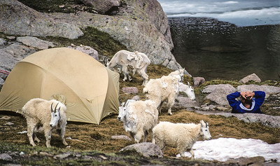 Mountain Goats & Camper