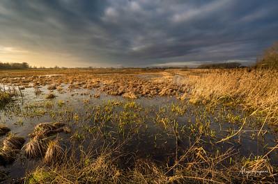 Dramatic wetlands