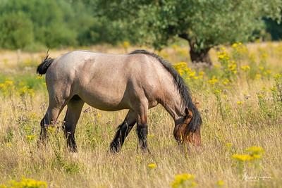 Horse in summer meadow