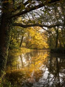 Autumn in Reinaartpark