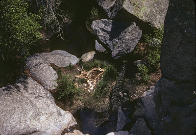 Mule Deer Fallen from cliff