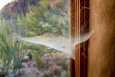 North Window With Spider Web #4