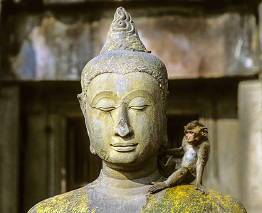Macaque Monkey on Buddha Statue