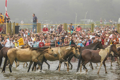 Chincoteague Island Pony Swim #6
