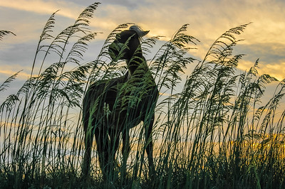 Wild Horse and Sea Oats #1