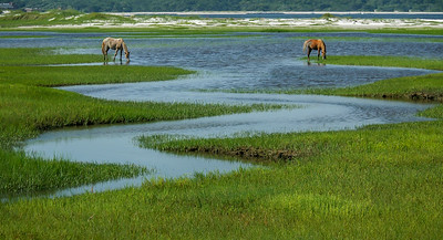Wild Horses and Salt Marsh Tidal Creek