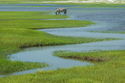 Wild Horses and Salt Marsh Tidal Creek #2