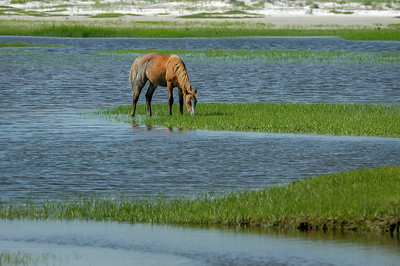 Wild Horse and Salt Marsh Tidal Creek #3