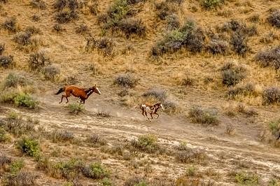 Wild Horses Running #3