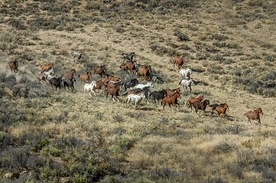Wild Horses Running #13