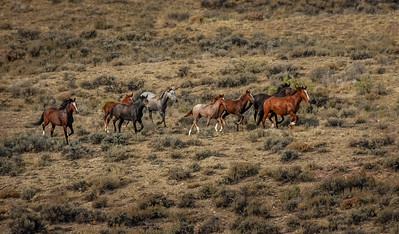 Wild Horses Running #8