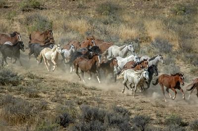 Wild Horses Running #15