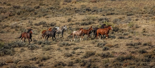 Wild Horses Running #7