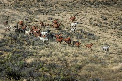 Wild Horses Running #11