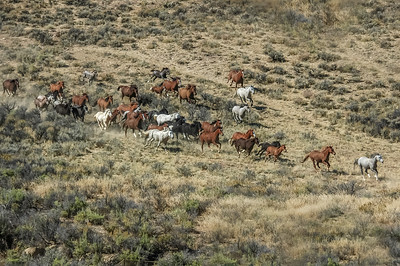 Wild Horses Running #12