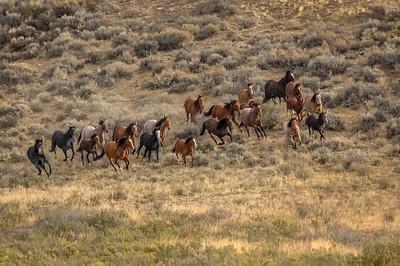 Wild Horses Running #6