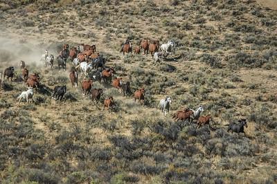 Wild Horses Running #10