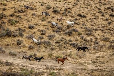 Wild Horses Running #2