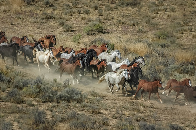 Wild Horses Running #14