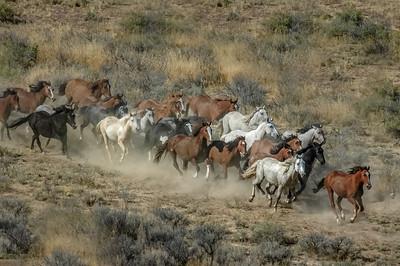 Wild Horses Running #16