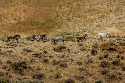 Wild Horses Running #1