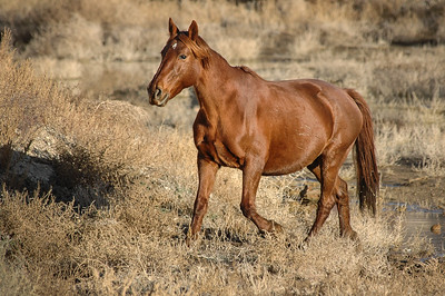 Wild Horse Trotting Near Route 6 #1