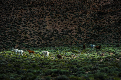 Wild  Horse Band in Sunlight